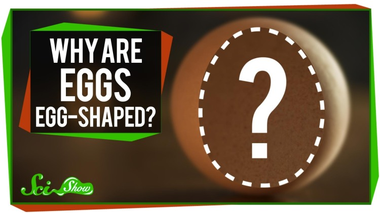SciShow Explains Two Possible Reasons Why Eggs Are Egg-Shaped