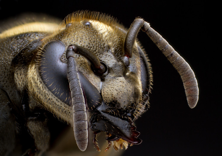 Insects Unlocked Crowdfunded Public Domain Photos