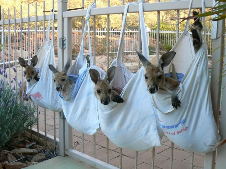 4 Bags of Joeys