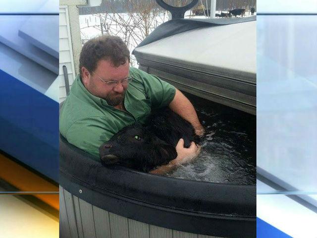 Calf in Hot Tub