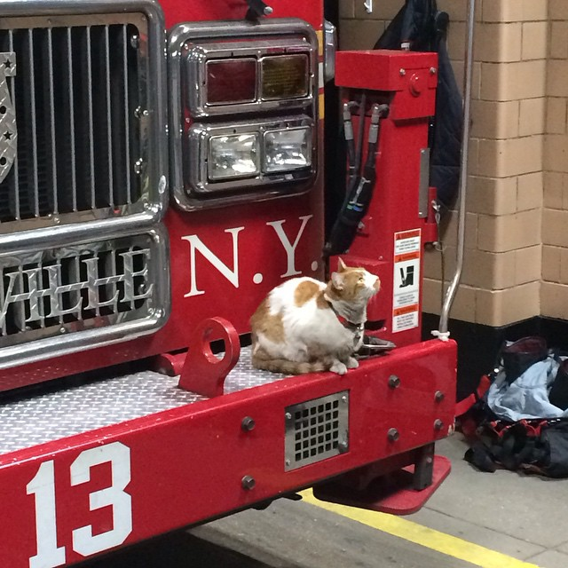 Loyal Felines Provide A Cat's-Eye View of Life Inside a New York City Firehouse with Their Own Instagram Accounts