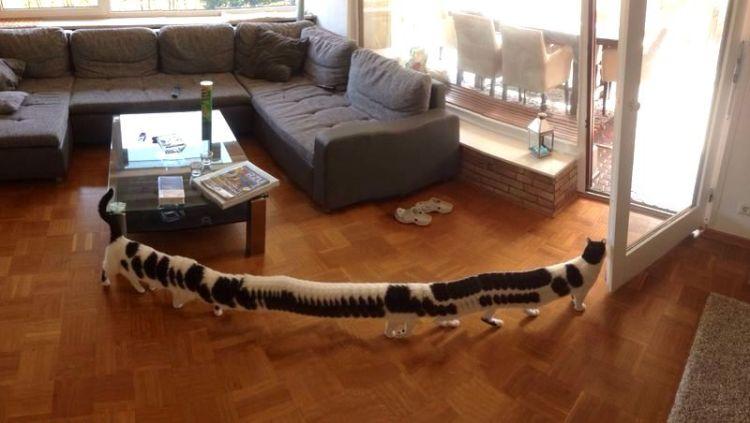 Centipede Cat