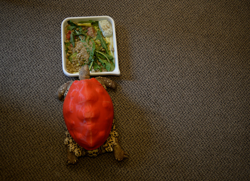 Tortoise prosthetic shell