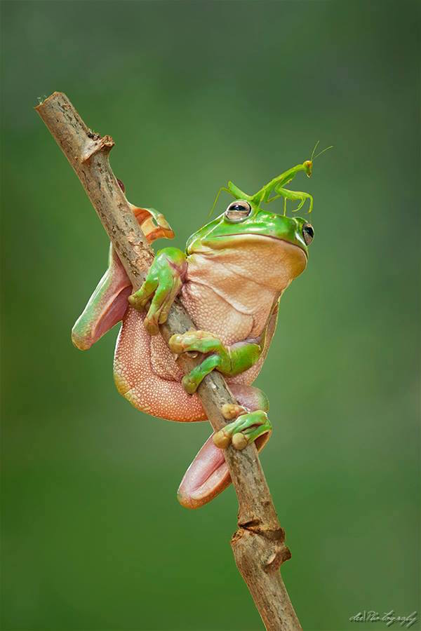 Frog and Praying Mantis