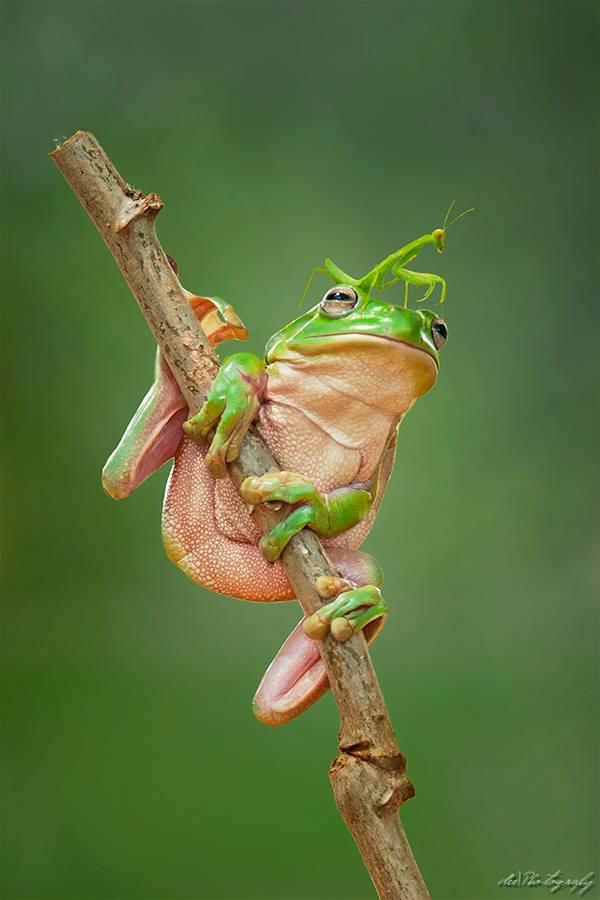 Frog and Praying Mantis
