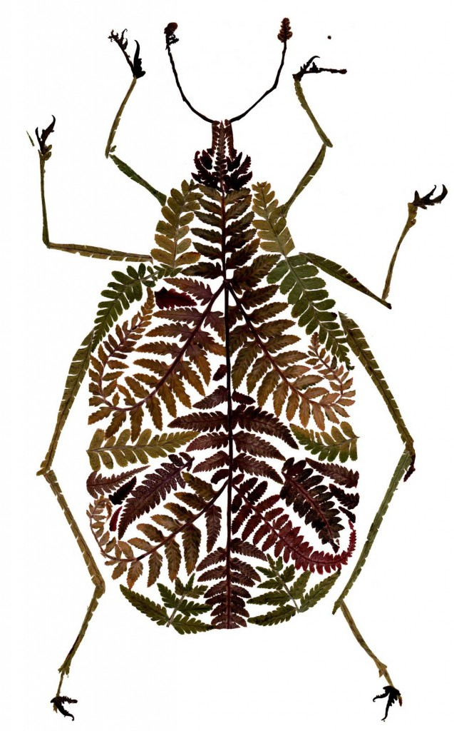 Pressed fern weevil