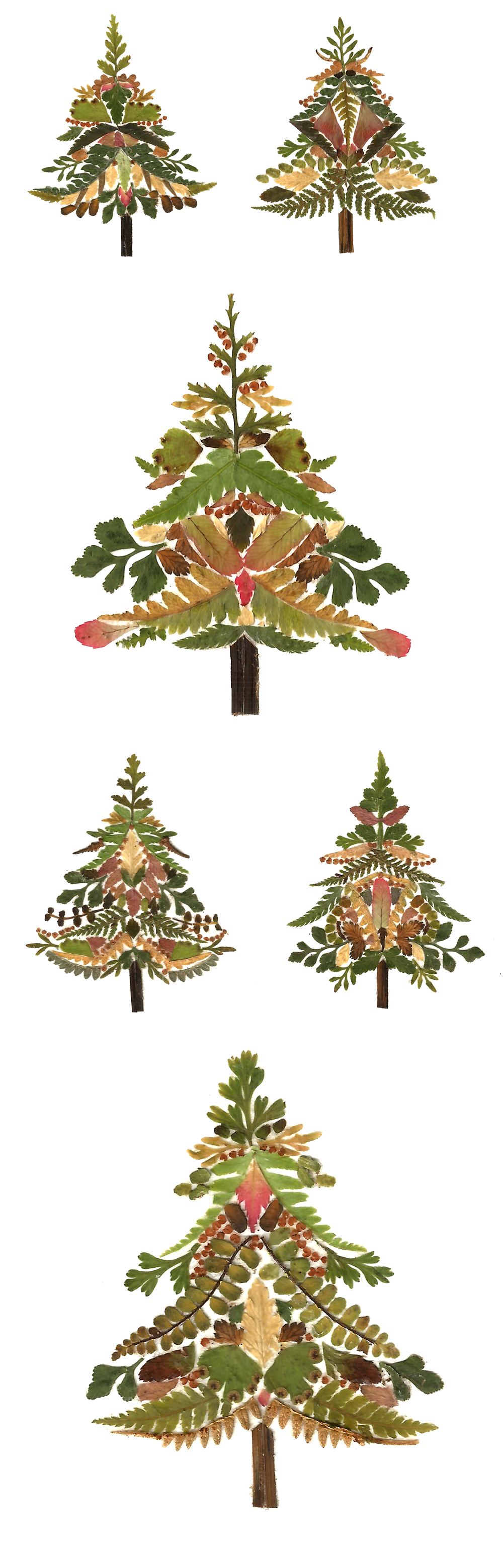 Pressed fern trees