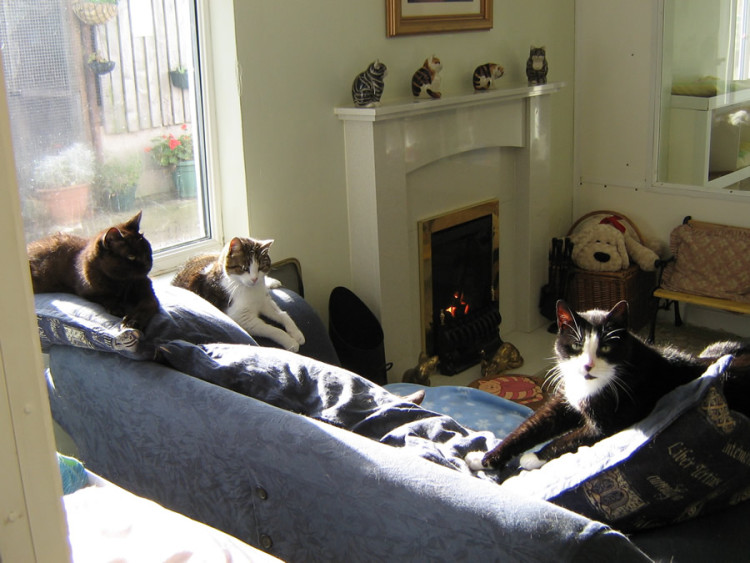 Lincolnshire Trust for Cats 1