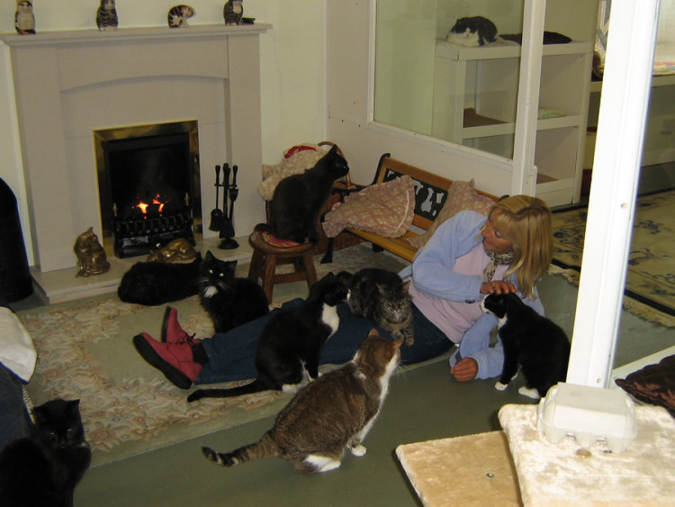 Linconshire Trust for Cats 2