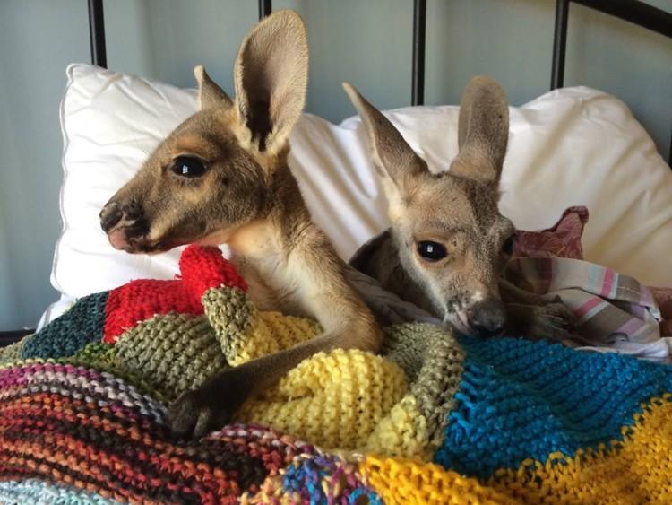 Possum and Bertie
