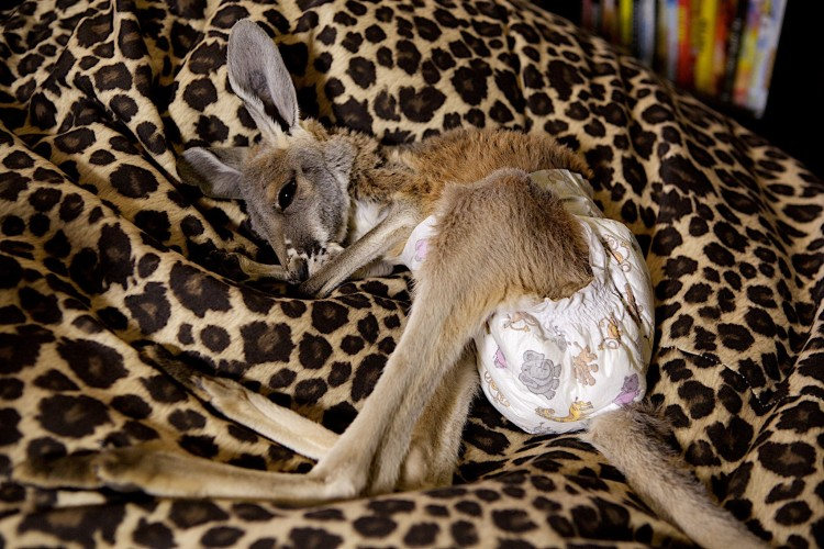 Roo in Nappies