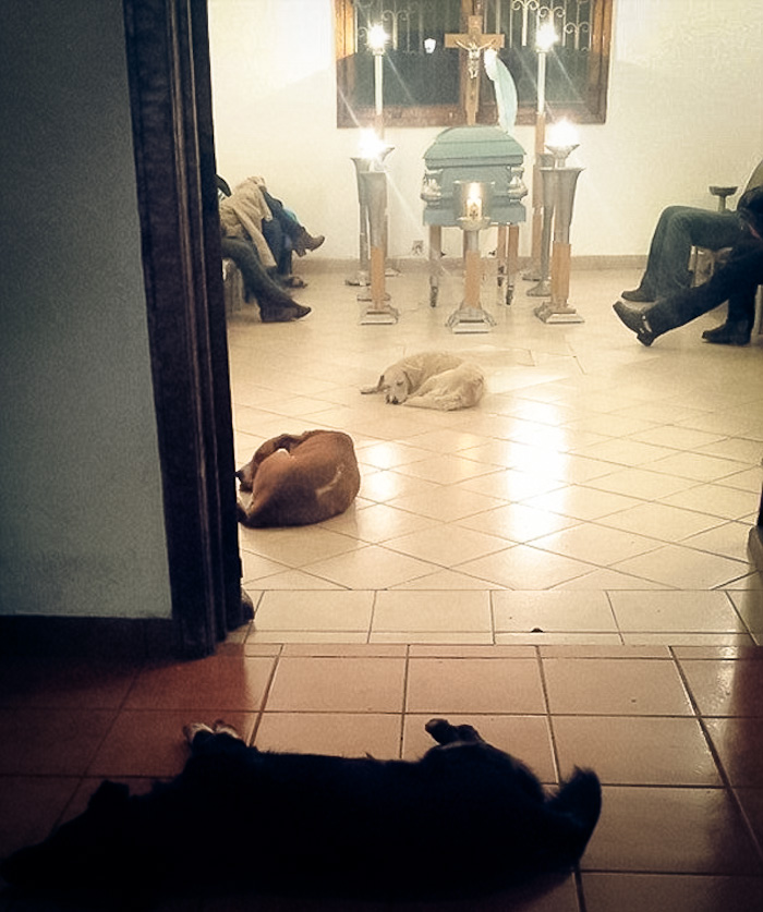 Stray Dogs at Funeral