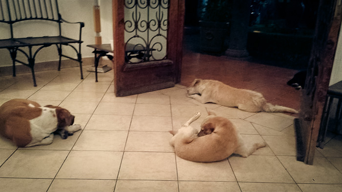 Stray Dogs at the Door
