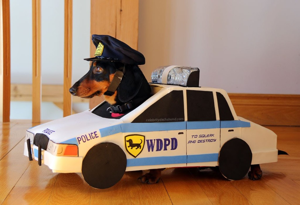A Pair of Dachshunds Play a Game of Cops and Robbers While Decked Out in Adorable Costumes