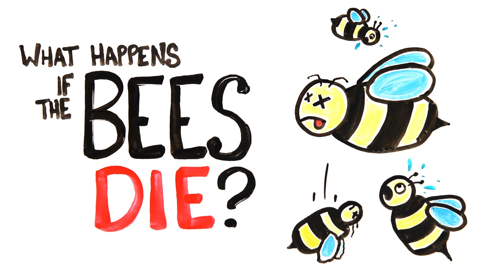 An Explanation of the Possible Ramifications of Bees Going Extinct