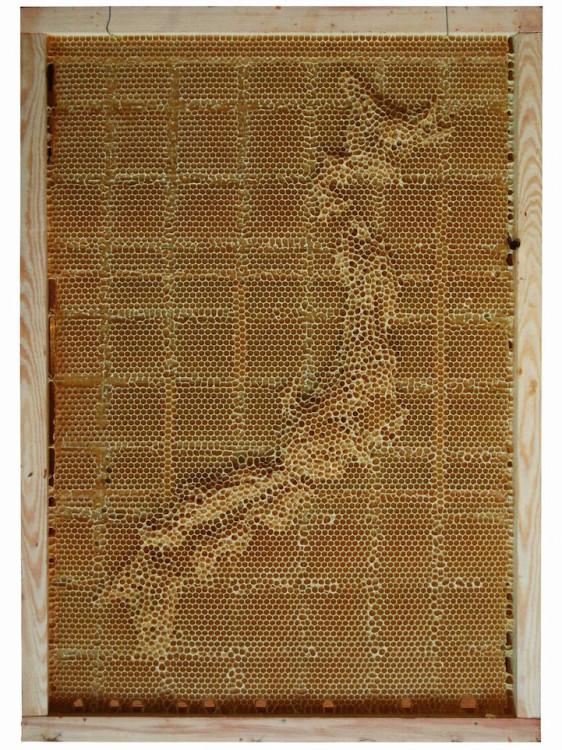 Honeycomb Maps by Ren Ri