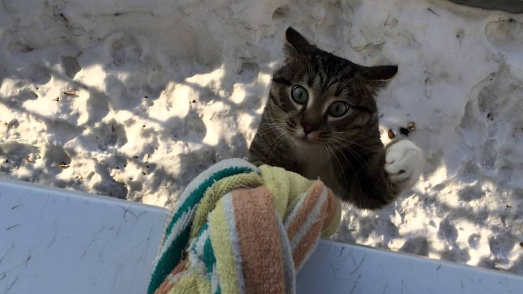 Tenacious Tabby Cat Skillfully Climbs Up a Braided Towel Rope to Reach His Human's Second Floor Apartment