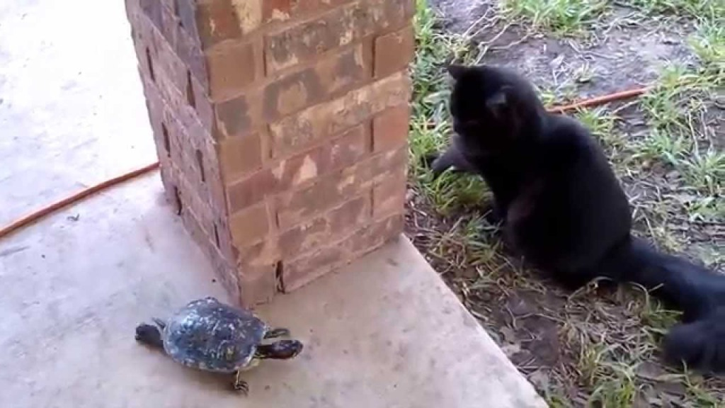 Tiny Turtle and Fluffy Black Cat Play an Adorable Game of Tag Around a Brick Pole