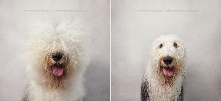 Bones - Dry Dog Wet Dog