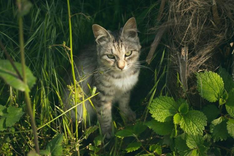 Cat Island 2