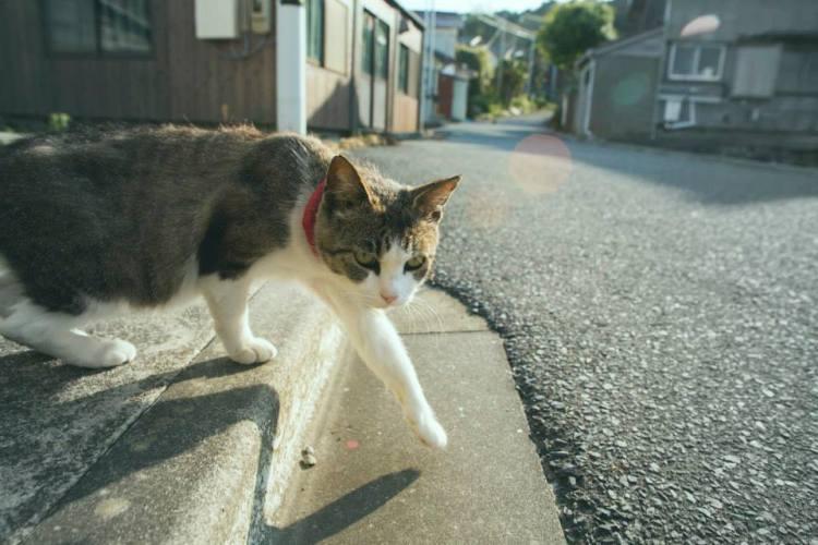 Cat Island - Cat in Street