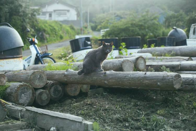 Cat Island - Cat on Log