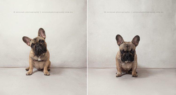 Garfunkel - Dry Dog Wet Dog