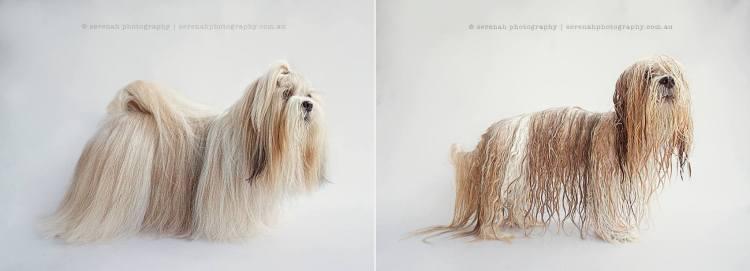 Harry - Dry Dog Wet Dog