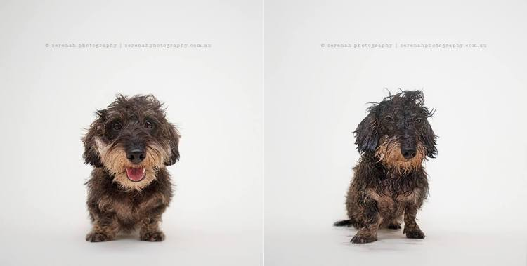 Henri - Dry Dog Wet Dog