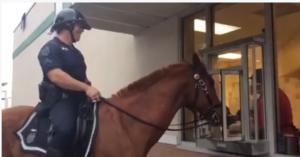 Horse at Krispy Kreme