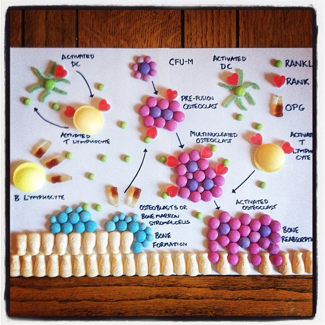 Candy Anatomy A Medical Student Creates Colorful Human Anatomy