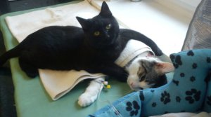 Rademenes and Black CAt
