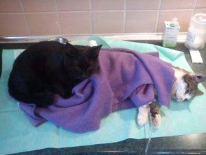 Rademenes and Purple Blanket
