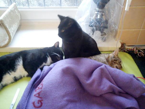 Rademenes and Two Kittie