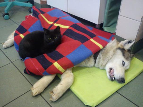 Rademenes and Husky