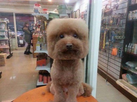 Cool Taiwanese Pet Groomers Give Haircuts To Small Dogs To Make Their Short Hairstyles Gunalazisus