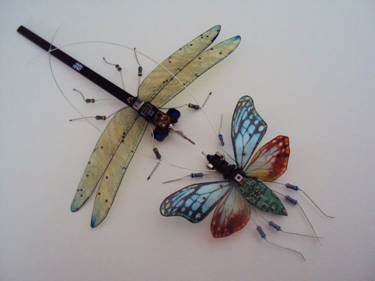 Two Bug Assemblage