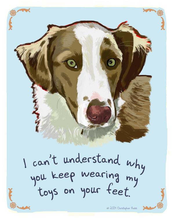 Tiny Dog Confessions