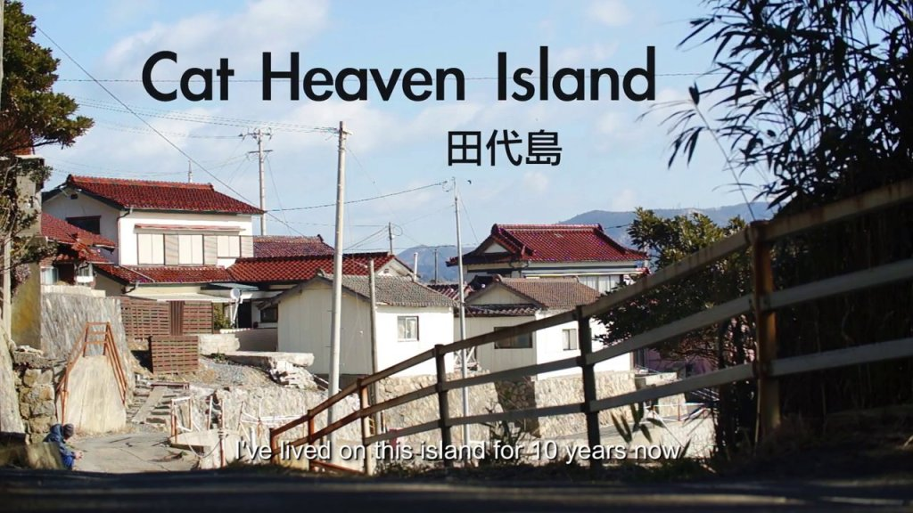 'Cat Heaven Island', A Short Film About the Island in Japan Where Cats Outnumber Humans