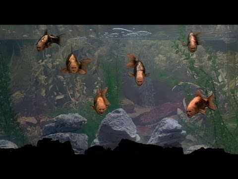 'Find a Fish', The Classic Surreal Intermission Sketch From Monty Python's 1983 Film 'The Meaning of Life'