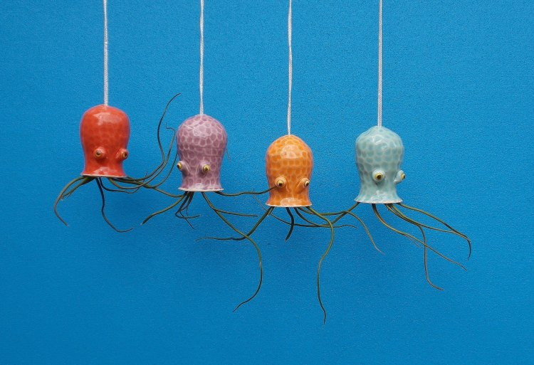 Ceramic Cephalopod Planters for Air Plants by Cindy and James Searles