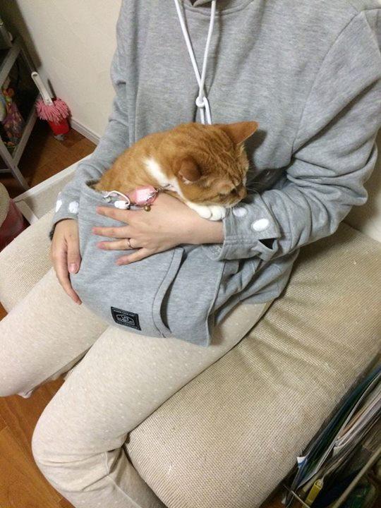 Mewgaroo and orange cat