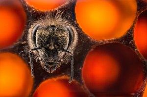 A cute bee