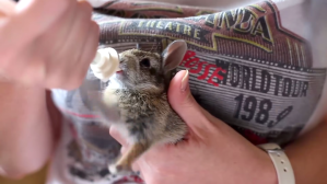Baby Rabbit Pedals Front Paws