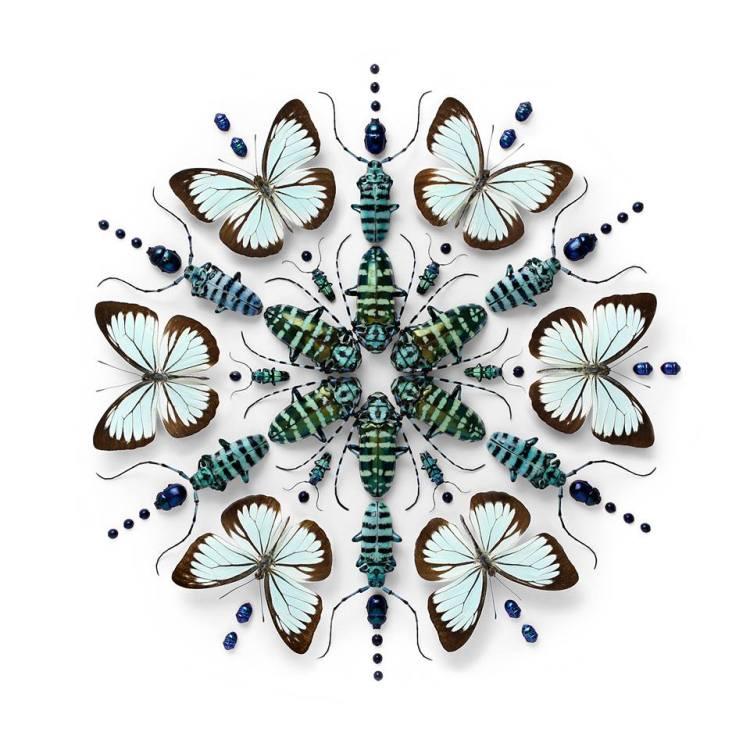 Blue and Brown Butterflies