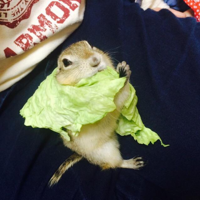 Cabbage Cape