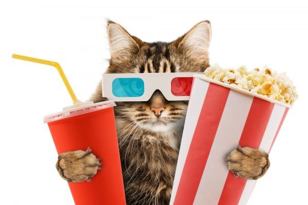 Cat Popcorn