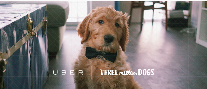 Dog Delivery by Uber