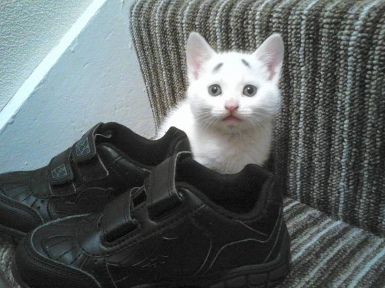 Gary and Sneakers