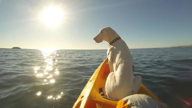 Pegasus in Boat
